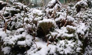 -4℃…2日続けて積雪するのは珍しい