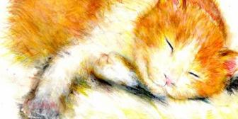 氏んだ飼い猫を抱っこしたまま動かない妹「抱っこしてたら起きるから(泣)」→仕事も行かずヤバイと思い、無理やり妹から猫を取って共同墓地みたいなところに置いてきた結果…