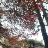 『晩秋の盧花恒春園 by DSC-R1』の画像