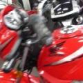 【動画】バイク買取MCG福岡ホンダ CBF125 ビキニカウルモデル 125cc レッド19170Km URL http://www.mcgfukuoka.com