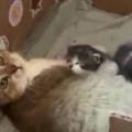 母ネコは子育て中。初めまして子猫ちゃん♪ → 鳥が挨拶にやってきた…