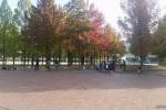 紅葉が始まってる。いきいきランドのところ~落ち葉もいい感じになってきてる~