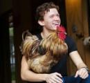 買い占めで卵が買えなかったトム・ホランド、ニワトリを3羽買う