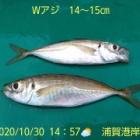 『笑転爺の釣日記 10月30日⛅ 浦賀港岸壁』の画像