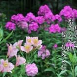 『裏庭の彩り』の画像