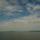 『【昆虫】海岸で見かけたゾウムシ【鳥】【空】【写真あり】』の画像