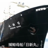 『日本捕鯨 今日7/1から再開-巨大工場 捕鯨母船「日新丸」が出港』の画像