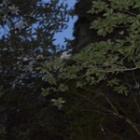 『夕暮れの乱舞』の画像