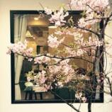 『桜満開!!』の画像