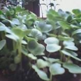 『栽培』の画像