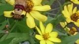 蝶と蜜蜂のハイブリッドみたいなクッソキモい虫見つけたったwww(※画像あり)