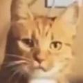 ネコの爪にオモチャが引っかかる。何見てんだコラ、見せもんじゃねーぞ、散れ散れ! → 猫はこうした…
