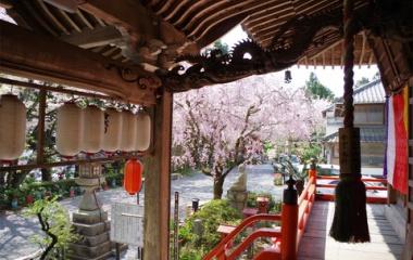 『不動寺の桜』の画像