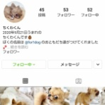 Go forward! forわんDog