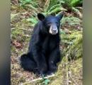 人間に慣れすぎて大人しく人の自撮りにまで収まってしまうクマ。殺処分で酷いクマ(・(ェ)・)