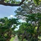 『宮古島のシメ』の画像