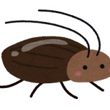 【閲覧注意】エメラルドゴキブリバチ、ガチで怖すぎる・・・
