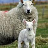 『羊の母子』の画像