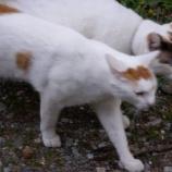『猫ちゃん、かぞえうた』の画像
