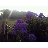 『朝日を浴びて』の画像