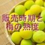 梅の販売時期と熟度