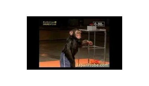 チンパンジーが日本のSASUKEにチャレンジしている映像が海外で人気沸騰