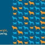 『犬猫の肥満:米国の調査から』の画像