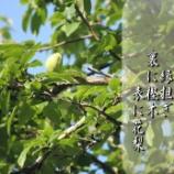 『表に花梨』の画像