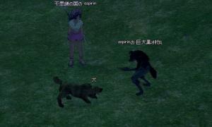 オオカミペットが家畜の犬から攻撃されるようになっている…