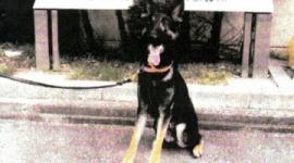 【兵庫】行方不明者を捜索中の警察犬が逃走…県警「見つけたら110番してほしい」
