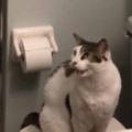 ネコがトイレの上で待っていた。シャワーの水が飲みたいにゃ♪ → 猫は毎朝こうします…