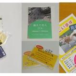 『メディア掲載事例<ペットライフサポートふぅさん>「うちの子防災スターターキット」販売開始!』の画像