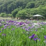 『6月の色①(花菖蒲①)』の画像