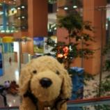 『日本です ~ 【関西空港ぶらぶら】』の画像