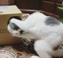 顔が2つある子猫「ヤヌス猫」が誕生 米オレゴン州