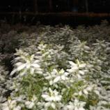 『雪☃️』の画像