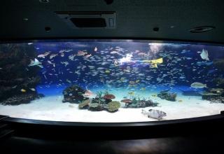 魚が1235匹死んだサンシャイン水族館の現在の様子wwwwwwwww