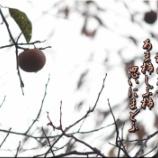 『あま柿しぶ柿』の画像