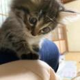 実家猫マロとクロの写真と、スミレ、アヤメの初対面動画