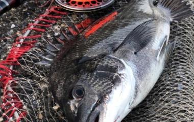 『2020.03.20 初釣り』の画像
