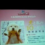 『映画『犬と私の10の約束』と、今は亡き愛犬ペロ🐶』の画像