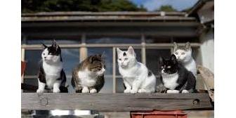 ネコアレルギーなのにネコ5匹いる嫁実家に年2回3泊させられるんだが