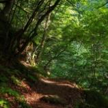『美しい森』の画像