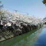 『春本番』の画像