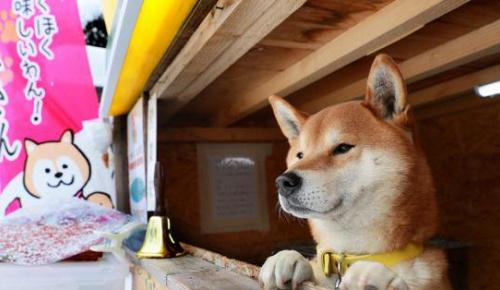 柴犬が店番をする札幌の「イヌのやきいもやさん」が海外でも話題に