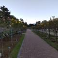 2021年10月17日 敷島公園バラ園