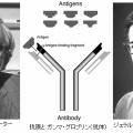 第72回ノーベル生理学・医学賞 エデルマン・ポーター「抗体の化学構造に関する発見」