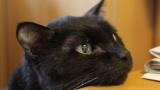 飼い猫に1つだけメッセージを伝えることが出来るとしたらなんて言う?