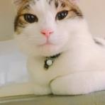 野良猫保護初心者ブログ