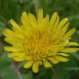 『草の 花』の画像